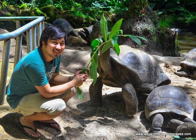 tortoise feeding in Seychelles