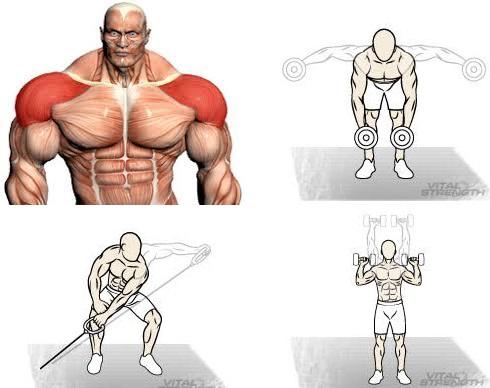 Shoulder Workouts for Mass: 4Tips