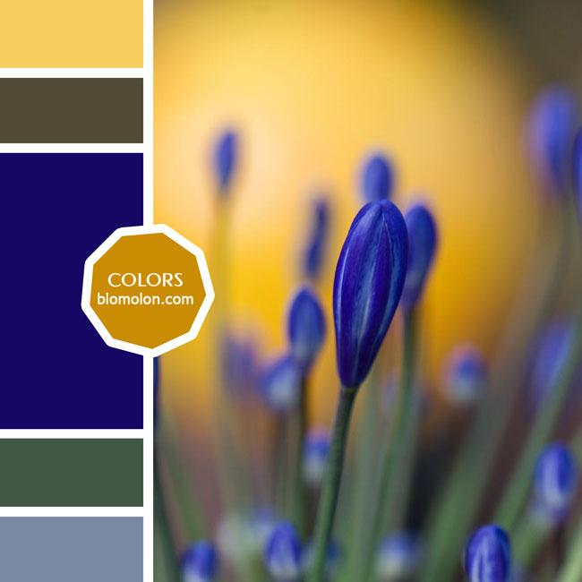 variedad_en_color_paletas_colores_2c