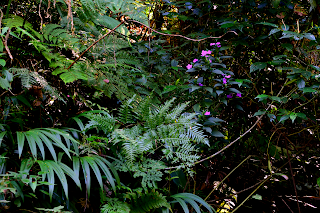 tropical plants in forest