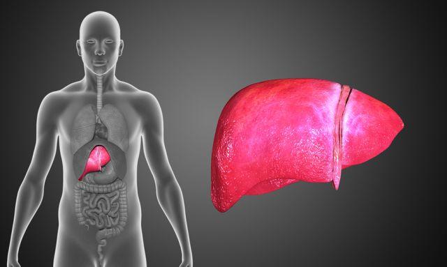 Λίπος στο συκώτι  Πότε εξελίσσεται σε επικίνδυνη στεατοηπατίτιδα - Ποια  είναι η σωστή διατροφή 4f8cc9d34d6