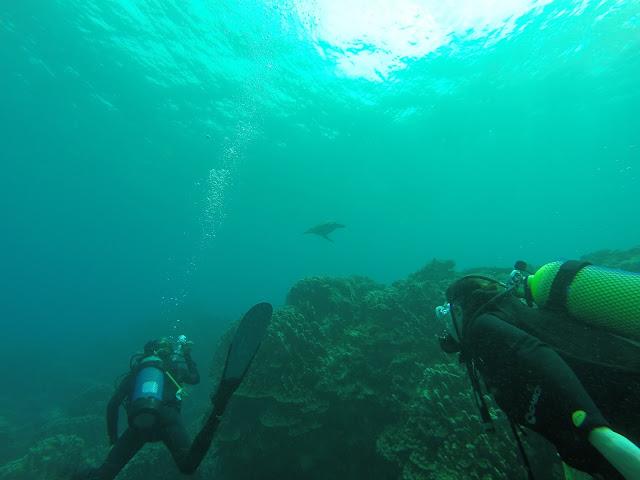 Buceo en Isla de Pascua