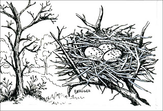 nido de Urraca común Cyanocorax chrysops
