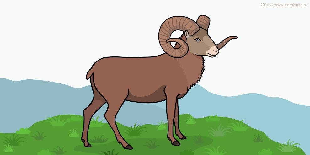 Алтайский горный баран - большая картинка