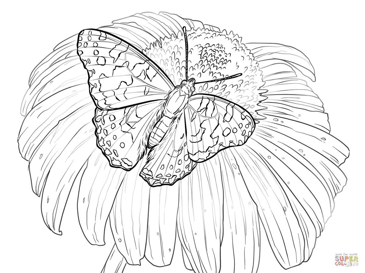Best Butterfly And Flower Designs Coloring Pages Image