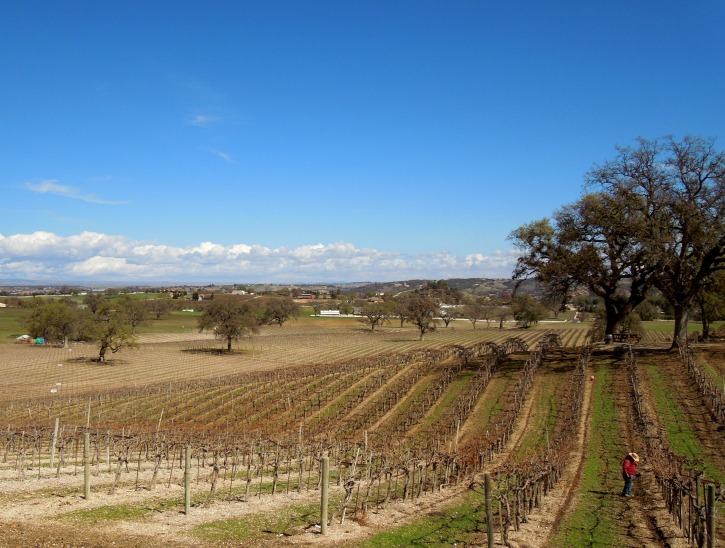 2019 Paso Robles and Templeton Wine Country Calendar: Spring Maintenance Photo