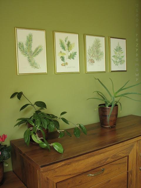 leśne rysunki, leśne obrazki, leśne ryciny, ogród przydomowy