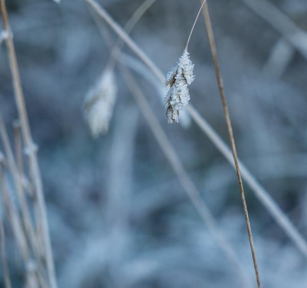 fim.works | Fotografie. Wortakrobatik. Wohngefühl. | Ein Wintertag