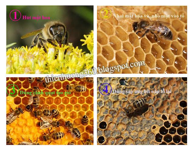 Quá trình Ong làm ra mật