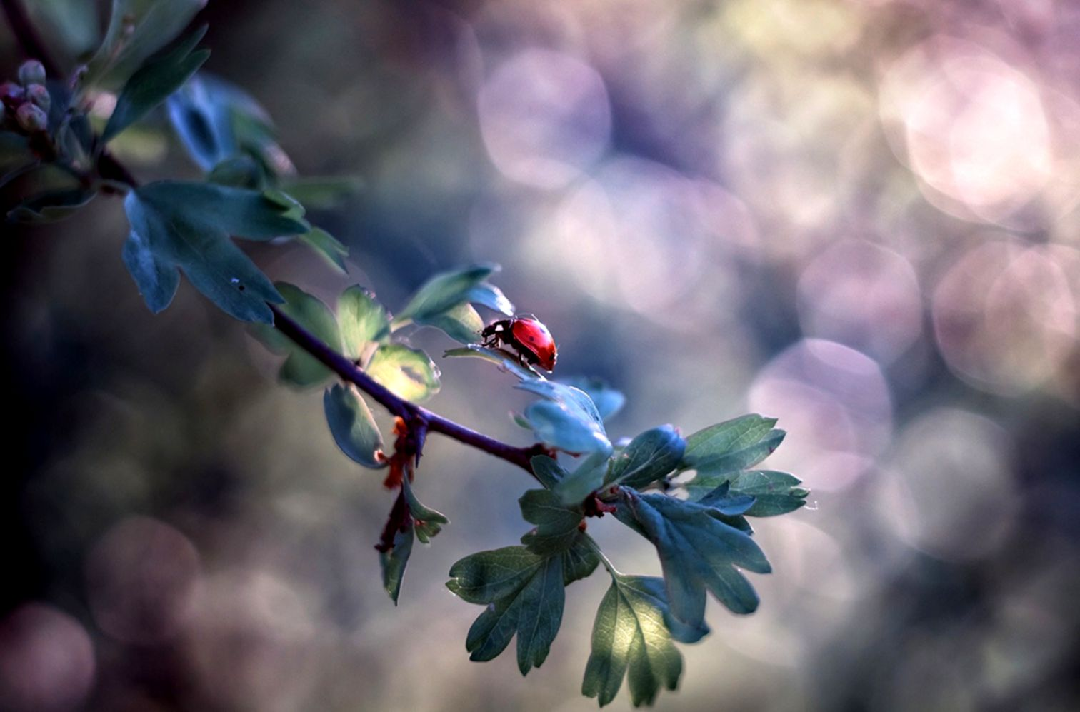 ladybug insect branch bokeh hd wallpaper | best wallpapers hd gallery