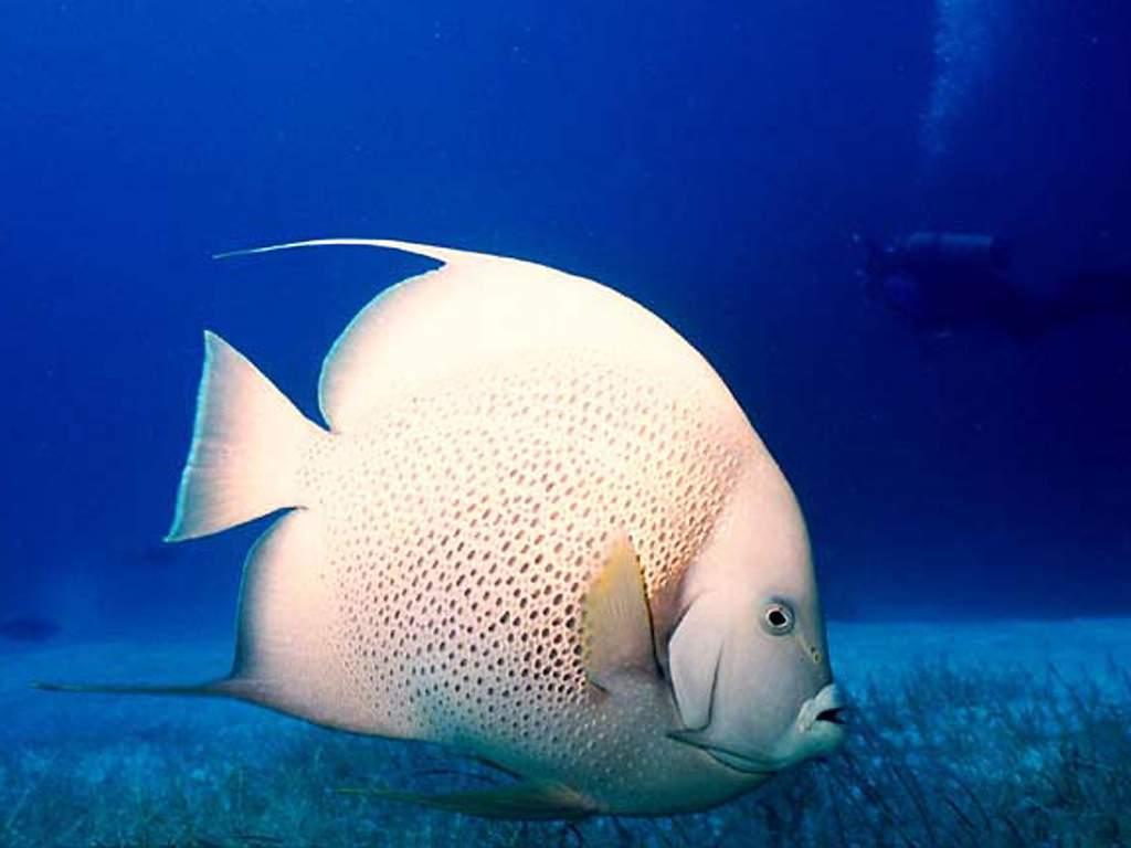 Wallpaper Hd Wallpaper Fish
