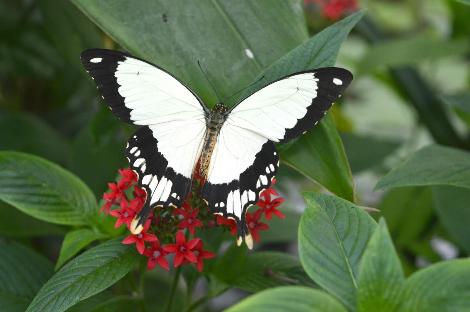 Butterflies Preston Park, Teesside