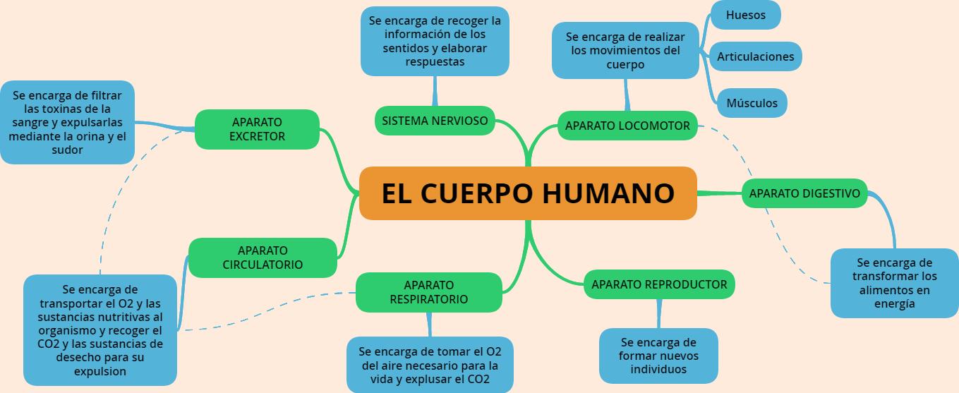 CUARTO 2016: MAPA MENTAL EL CUERPO HUMANO
