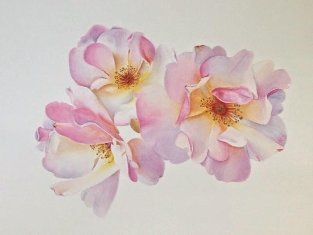 Schilderijen van orchidee n en andere botanische werken botanisch schilderen rozen roses - Hoe roze verf ...