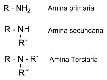 Química Orgánica: ANIMAS