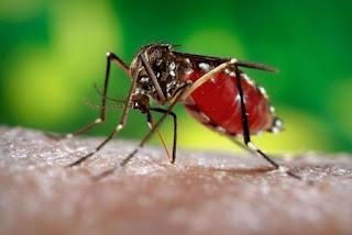 Casos suspeitos de dengue aumentam 243% e os de zika crescem 146%