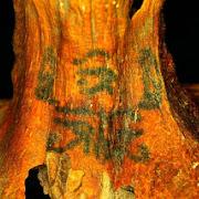 На останках египтянки, похороненной 3 тысячи лет назад обнаружена загадочная татуировка