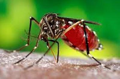 ciri-ciri gejala penyakit demam berdarah dbd