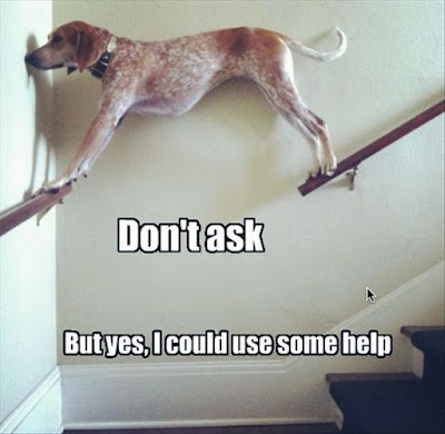 Funny And Hilarious Dogs On Pinterest
