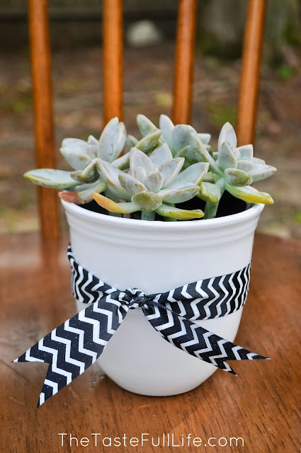 DIY Succulent in a Mug for Mother's Day