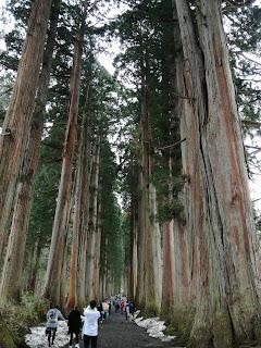 杉並木 樹齢400年