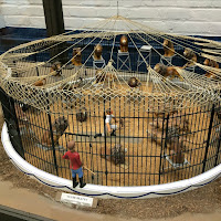 New England Fall Events_The Big E_Circus Museum_Miniature Circus Model_Clyde Reynolds_Brooke Evans_Lion Tamers