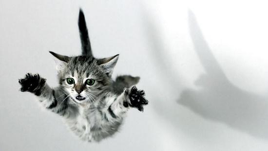 Penyebab Kucing Tidak Mati Saat Jatuh Dari Ketinggian