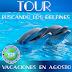 Tour buscando los delfines Agosto 2016
