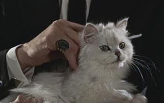 Spectre Blofeld cat