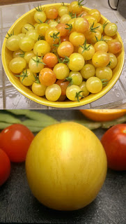 Two photos combined. The top half is a photo of a large yellow ceramic bowl filled with small cherry tomatoes. The cherry tomatoes area a mix of white and pale orange with a pink blush on one end. The bottom half is a photo of a closeup of a single larger tomato that is white with pale dark stripes. There are smaller red tomatoes and other items in the background.