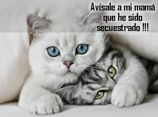 Imágenes Y Frases Bonitas Imágenes De Gatos Mininos Graciosos