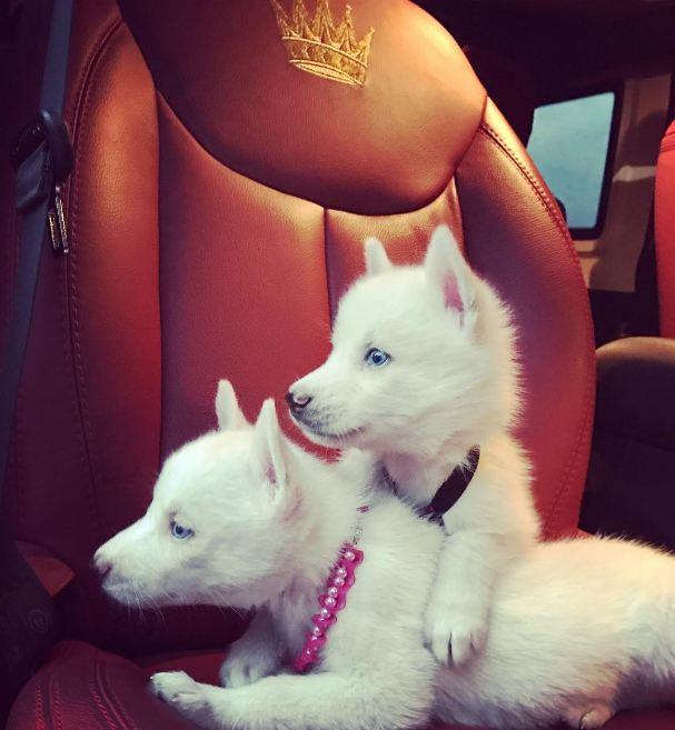 Maluma se compró un par de perros 'carísimos' Perritos