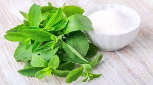 Mengenal Tanaman Stevia Yang Manis Alternatif Pengganti Gula
