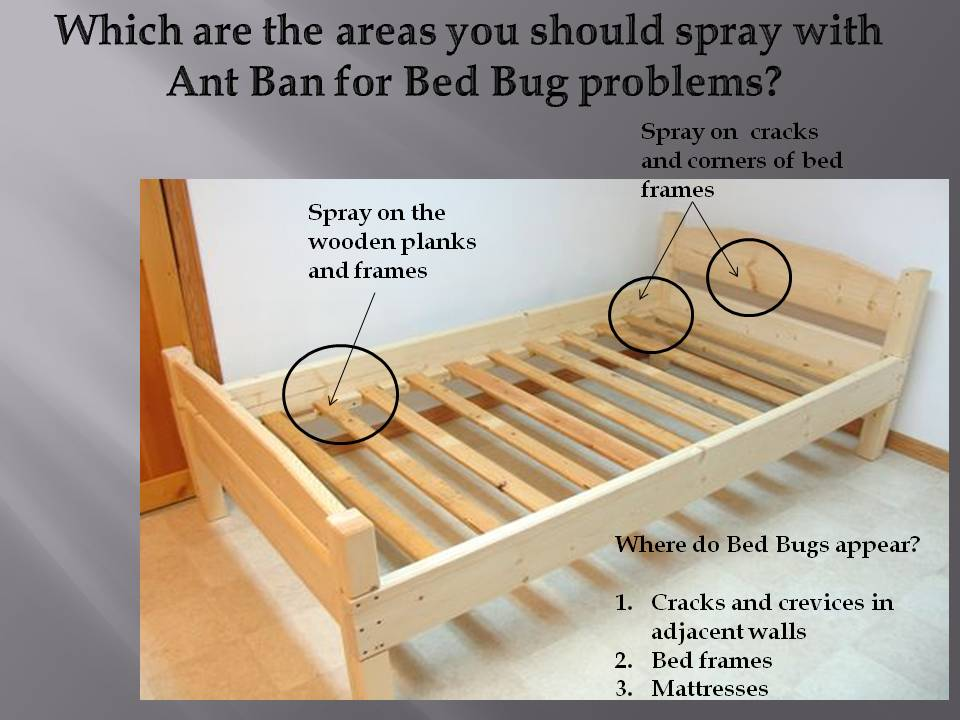 These Areas Are The Spots Where Bed Bugs Will Lay Their Eggs Especially At Dark And Warm Corners Constantly Spray Every 2 To 3 Days As Shown In