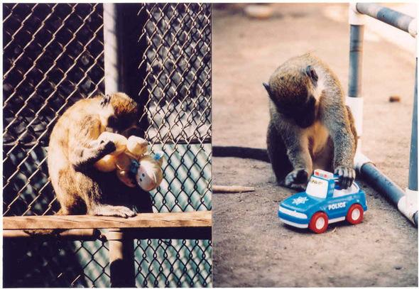 Monos Vervet juguetes