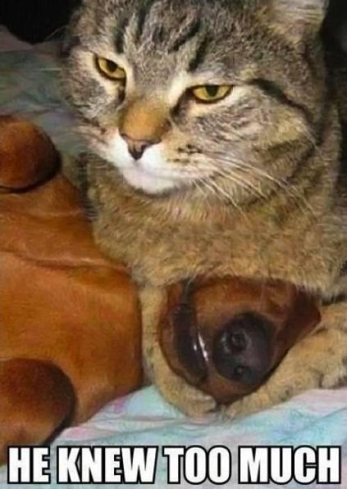 Cute Cat Memes 3