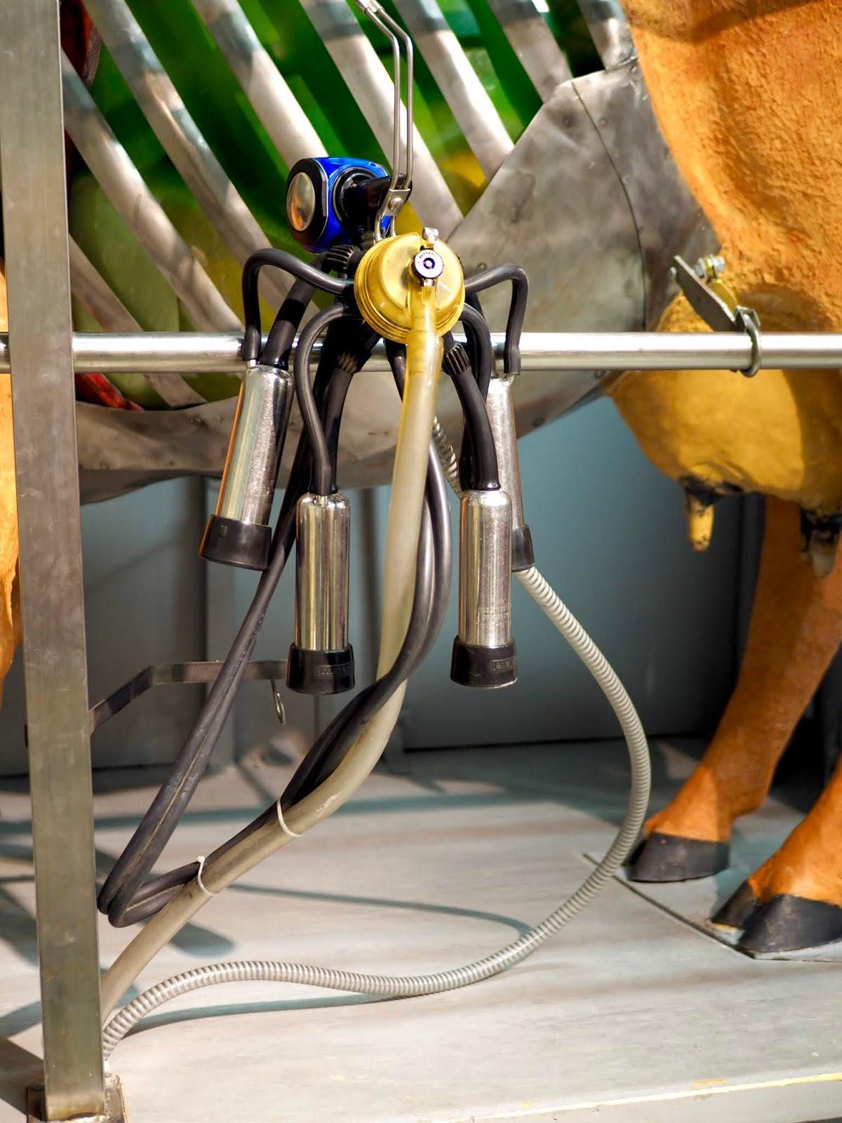 Lehmää voi yrittää lypsää Maatalousmuseo Sarkassa