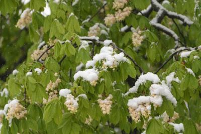 havazás, áprilisi tél, fagy, extrém időjárás, Románia, ANM, közlekedés,