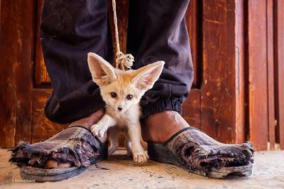 perrito muy pequeño