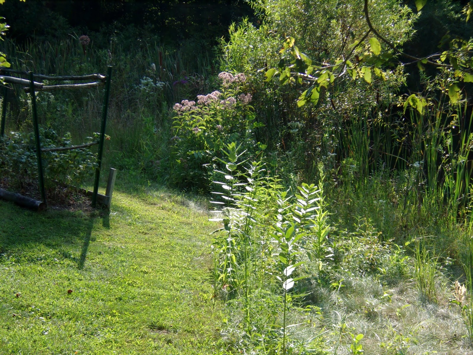 Where Have All Monarchs Gone >> Mike's Bean Patch