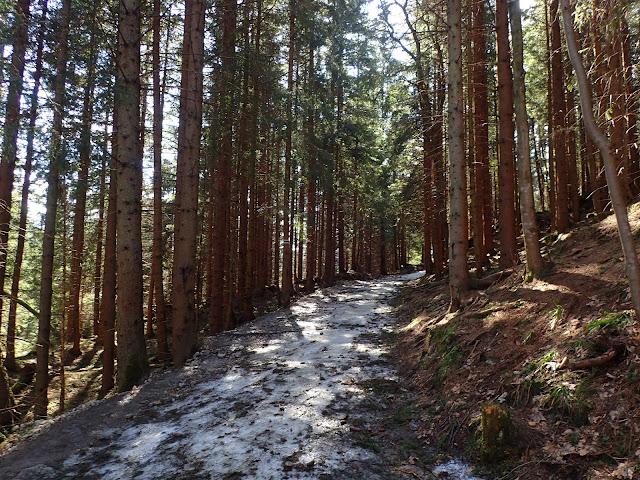 Szlak Kuźnice-Kalatówki