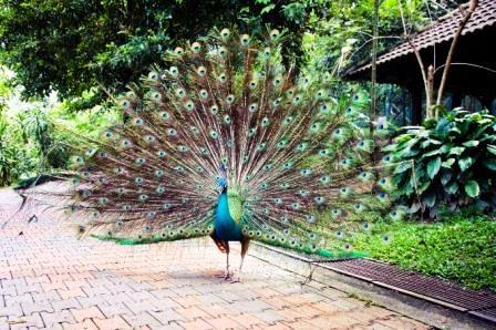 Objek Wisata Favorit di Kuala Lumpur Malaysia Taman Burung