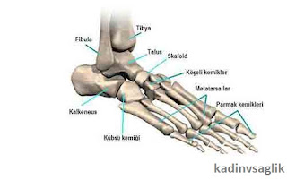 Ayak Hastalıkları