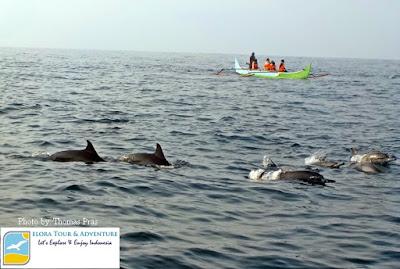 dolphin tour di teluk kiluan