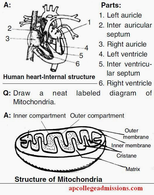 structure of stomata with diagram 2004 nissan xterra radio wiring 10th biology important bits and diagrams