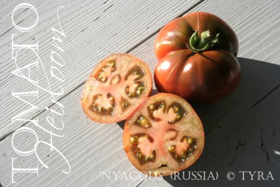 """""""Tomato Nyagous"""""""