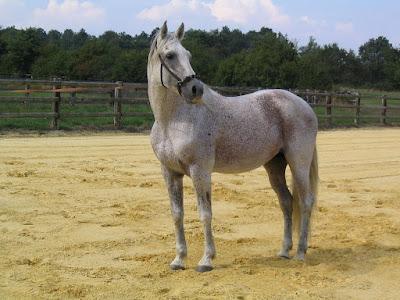 Atı Alan Üsküdar'ı Geçti Sözünün hikayesi