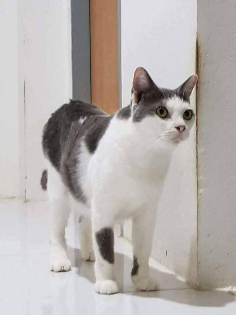 Anak Kucing yang Malang Hingga Perut Kucing Bisa Seperti Ini! (Kisah Sedih si Kucing Imut Ini)