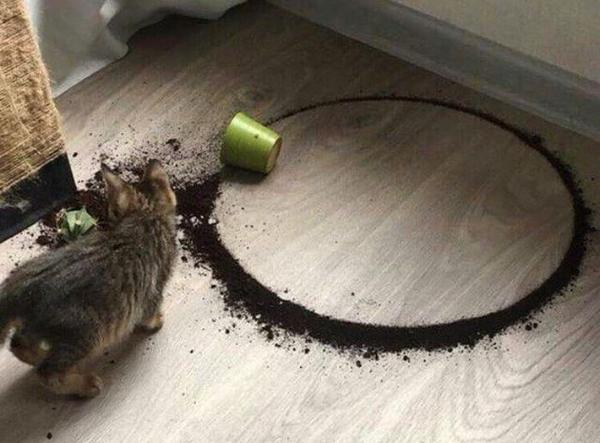 Кот рассыпал вазон с цветком - получился идеальный круг