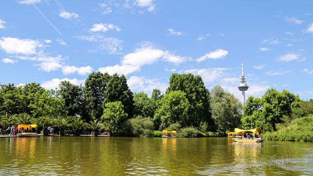 Godolettas und Karpfen im Luisenpark Mannheim